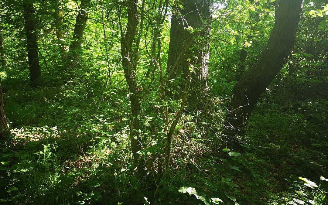 green sumer trees
