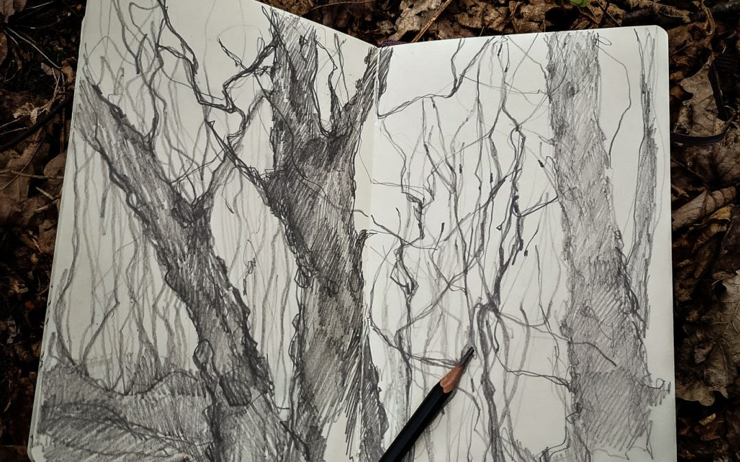 Drawn to Trees
