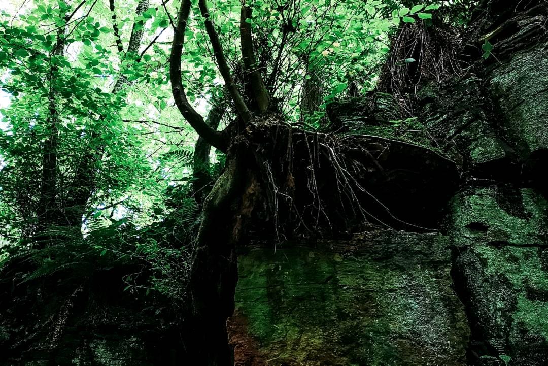 Dark tree roots